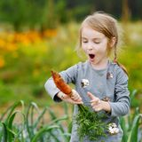 Adorable little girl picking carrots Royalty Free Stock Photos