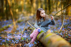 Adorable little girl picking the first flowers of spring in the woods Stock Photos