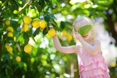 Free Adorable Little Girl Picking Fresh Ripe Lemons Royalty Free Stock Images - 55400689