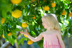 Adorable little girl picking fresh ripe lemons Royalty Free Stock Photography