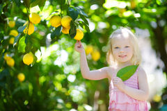Adorable little girl picking fresh ripe lemons Royalty Free Stock Photo