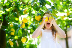 Adorable little girl picking fresh ripe lemons Stock Image