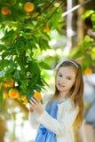 Adorable little girl picking fresh ripe oranges Royalty Free Stock Photo