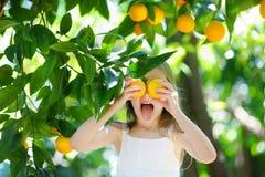 Adorable little girl picking fresh ripe oranges Royalty Free Stock Photography