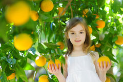 Adorable little girl picking fresh ripe oranges Stock Photos