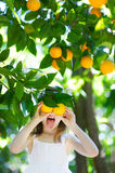 Adorable little girl picking fresh ripe oranges Stock Photography