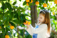 Adorable little girl picking fresh ripe oranges Stock Photography