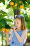 Adorable little girl picking fresh ripe oranges Royalty Free Stock Photos