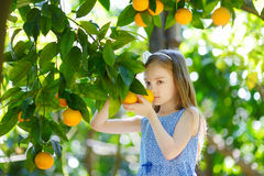 Adorable little girl picking fresh ripe oranges Royalty Free Stock Photo