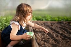 Adorable little girl planting seeds in the ground at the greenhouse stock image
