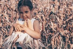 Little girl playing in a corn field on autumn. Child holding a cob of corn. Harvesting with kids. Autumn activities for children. Adorable Little girl playing in stock photo
