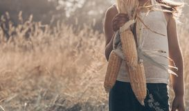 Little girl playing in a corn field on autumn. Child holding a cob of corn. Harvesting with kids. Autumn activities for children. Adorable Little girl playing in royalty free stock image