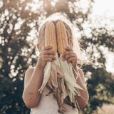 Little girl playing in a corn field on autumn. Child holding a cob of corn. Harvesting with kids. Autumn activities for children. Adorable Little girl playing in royalty free stock photo