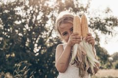 Little girl playing in a corn field on autumn. Child holding a cob of corn. Harvesting with kids. Autumn activities for children. Adorable Little girl playing in royalty free stock images