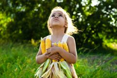 Little girl playing in a corn field on autumn. Child holding a cob of corn. Harvesting with kids. Autumn activities for children. Adorable Little girl playing in stock photos