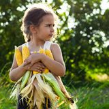 Little girl playing in a corn field on autumn. Child holding a cob of corn. Harvesting with kids. Autumn activities for children. Adorable Little girl playing in royalty free stock photos