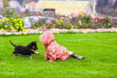 Adorable little girl playing with her puppy outdoor Royalty Free Stock Images