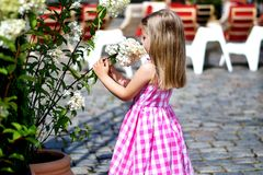 Adorable little girl playing near flower bush in a city park. Adorable little girl playing near flower bush Royalty Free Stock Photos