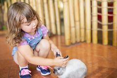Adorable little girl playing with rabbit at the petting zoo stock photo