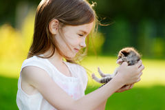 Adorable little girl playing with small kitten Royalty Free Stock Photos