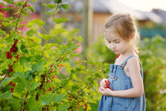 Adorable little girl with red currants Stock Photo