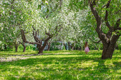 Adorable little girl with straw basket in. Little adorable girls with butterfly wings under blossoming apple tree Royalty Free Stock Image