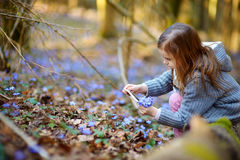 Adorable little girl taking a photo of first flowers of spring Stock Images