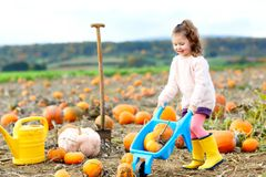 Adorable little girl of three years having fun with farming on a pumpkin patch. Traditional family festival with. Children, thanksgiving and halloween concept royalty free stock photos