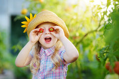 Adorable little girl wearing hat picking fresh ripe organic tomatoes in a greenhouse on summer evening Royalty Free Stock Photography
