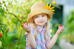 Adorable little girl wearing hat picking fresh ripe organic tomatoes in a greenhouse Stock Photography