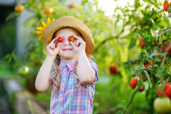 Adorable little girl wearing hat picking fresh ripe organic tomatoes in a greenhouse Stock Images