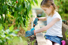 Adorable little girl wearing straw hat playing with her toy garden tools in a greenhouse Royalty Free Stock Photos