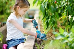 Adorable little girl wearing straw hat playing with her toy garden tools in a greenhouse Royalty Free Stock Photo
