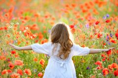 Adorable little girl wearing white dress in summer blooming field walking under evening sun. Back View stock images
