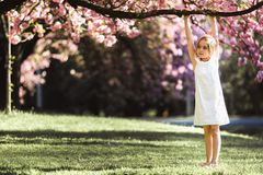 Adorable little girl in white dress in blooming pink garden on beautiful spring day stock image