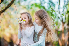 Adorable little girls in blooming cherry tree garden on spring day Royalty Free Stock Images
