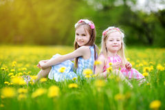Adorable little girls having fun together in blooming dandelion meadow Stock Photos
