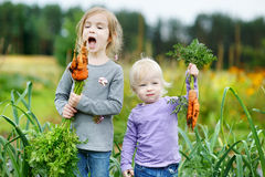 Adorable little girls picking carrots Stock Image