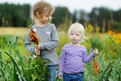 Adorable little girls picking carrots Stock Photo