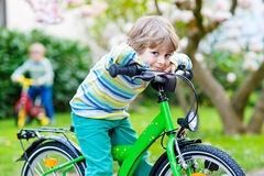Adorable little kid boy driving his first bike or laufrad Royalty Free Stock Photography