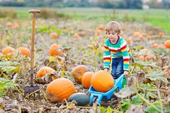 Adorable little kid boy picking pumpkins on Halloween pumpkin patch. Royalty Free Stock Photography