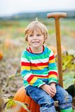 Adorable little kid boy picking pumpkins on Halloween pumpkin patch. Child playing in field of squash. Kid pick ripe vegetables on a farm in Thanksgiving Stock Photography