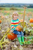 Adorable little kid boy picking pumpkins on Halloween pumpkin patch. Royalty Free Stock Photos