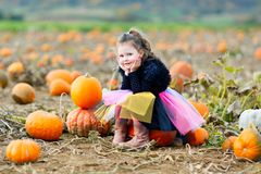 Adorable little kid girl having fun on pumpkin patch farm. Traditional family festival with children, thanksgiving and. Halloween concept. Cute child farmer royalty free stock photos