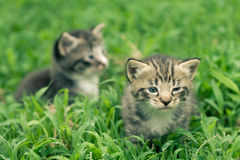 Adorable little kitten. S a great pet to adopt and own royalty free stock photos