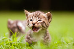 Adorable little kitten. S a great pet to adopt and own stock image