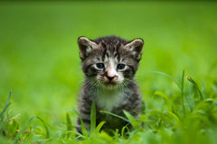 Adorable little kitten. S a great pet to adopt and own stock photo