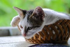 Adorable little kitten royalty free stock images