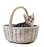Adorable little kitten on white background Royalty Free Stock Image