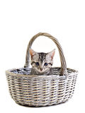 Adorable little kitten on white background Stock Images